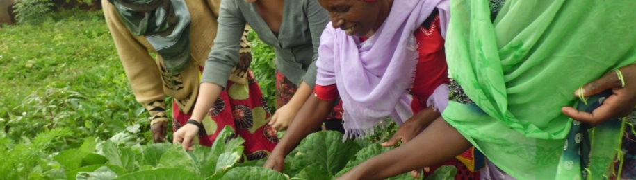 Diez años trabajando en el desarrollo social y económico de las mujeres mediante las cooperativas Image
